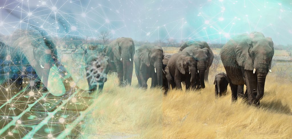 Elephants in Namibia with crypto graphic
